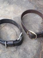 Dog Collar 4
